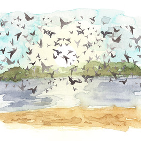 Bird Beach.jpg