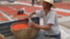 Chinese-Wolfburry-harvest.jpg
