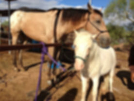 Rescue Horses at Desert Star Horse Rescue