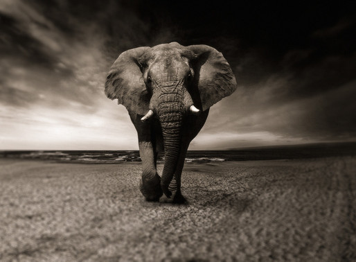 Keep Moving Forward With The Elephant