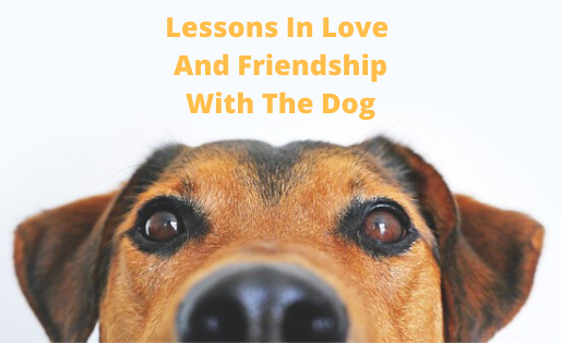 Lessons In Love And Friendship With The Dog