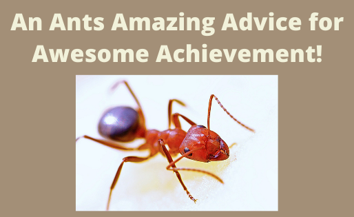 An Ants Amazing Advice for Awesome Achievement!