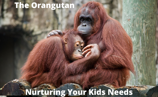 Nurturing Needs With The Orangutan