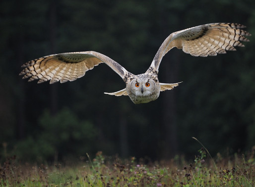 Be Mindful With The Owl