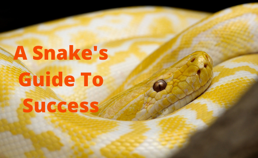 Every Snake's Secret To Achieving Personal Growth And Success