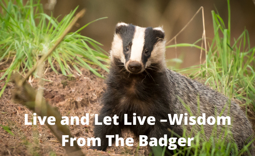 Live and Let Live –Wisdom from The Badger