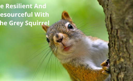 Be Resilient And Resourceful With The Grey Squirrel