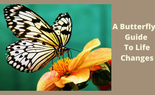 A Butterfly's Guide To Life Changes