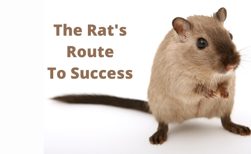 The Rat's Route To Success
