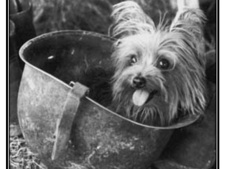 """This Day in History: Smoky, the """"Yorkie Doodle Dandy"""" of World War II"""