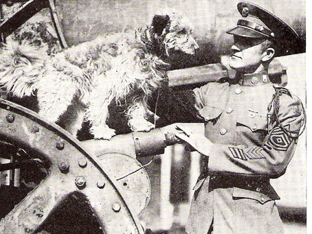 This Day in History: Rags, the dog who was a World War I hero