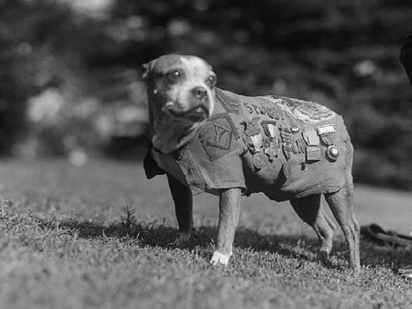 This Day in History: Sergeant Stubby, stray dog turned war hero