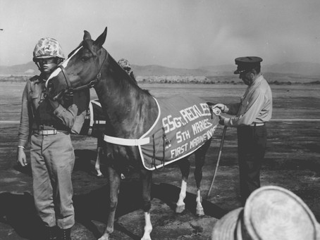 This Day in History: Staff Sergeant Reckless, the horse who was a U.S. Marine