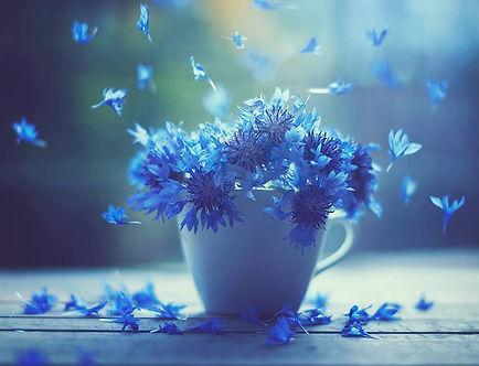 fleurs bleues.jpg
