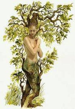 femme arbre.jpg