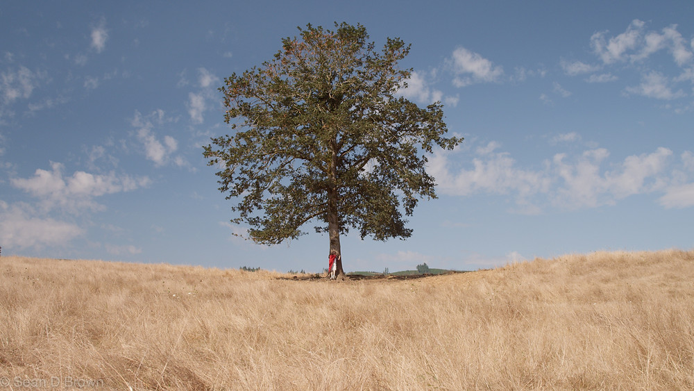 Kelly Deutsch under her oak tree. Sort of.