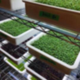 Greens rack.jpg