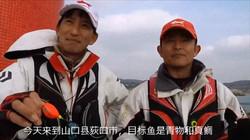 KIZAKURA全游动 真鲷和黄条鰤  中文版 1