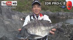 獲ったど~!チヌ50cm/新増初生 IDR PRO-L 2