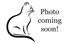 Cat coming soon photo.png