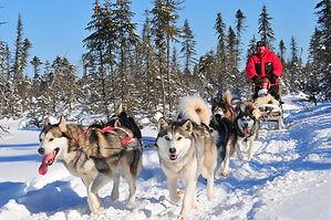 Frontière-traîneau-à-chiens.jpg