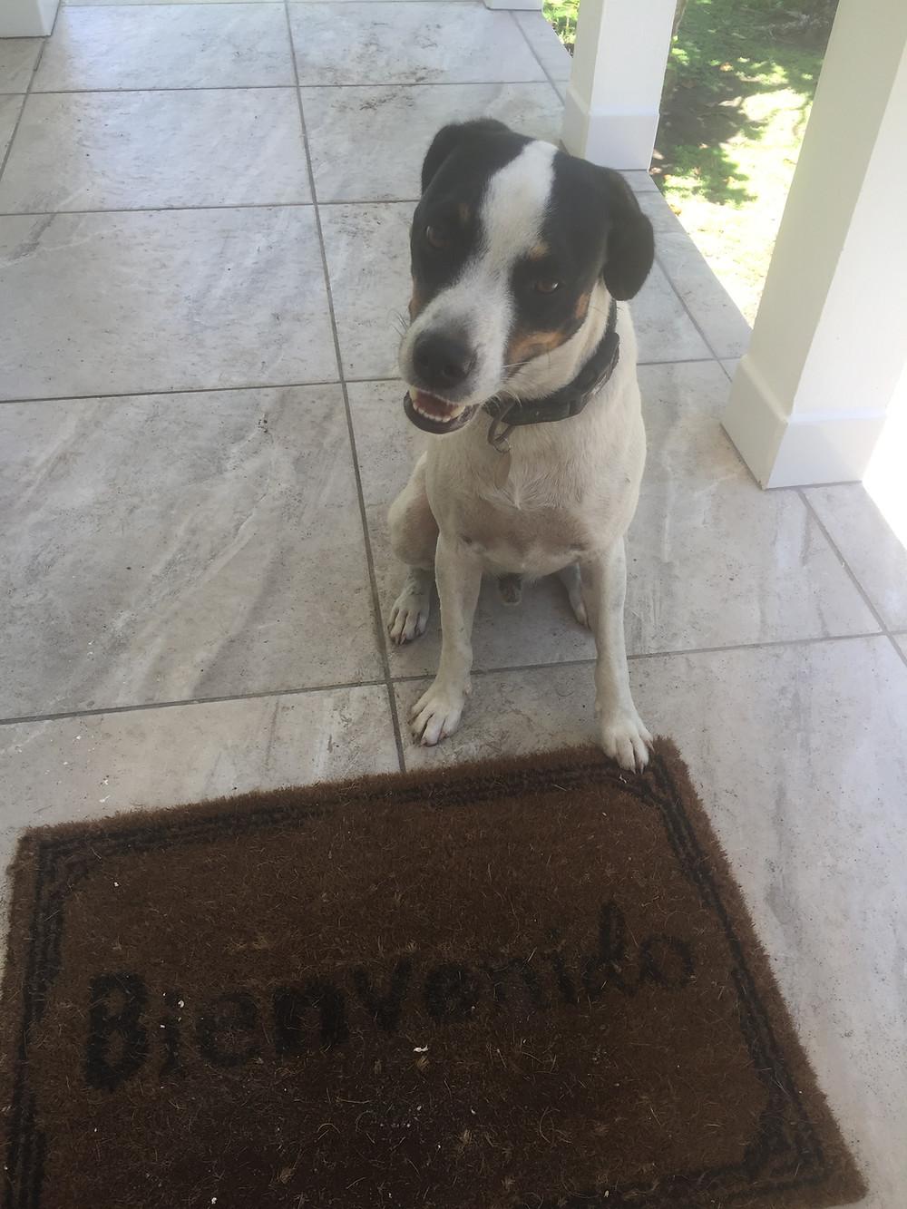 Lucky - our beach dog