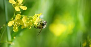 Bee Spirit