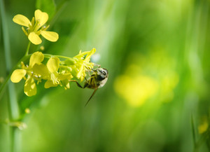 Save the bees roadshow comes to Kerikeri on May 18