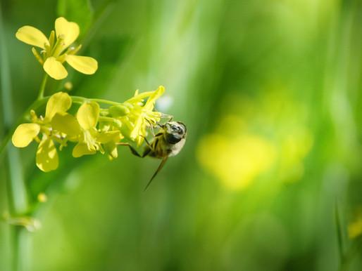 Goda nyheter: Detaljhandelsgigant slår ett slag för den biologiska mångfalden