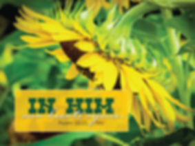 sunflower_19209cp.jpg