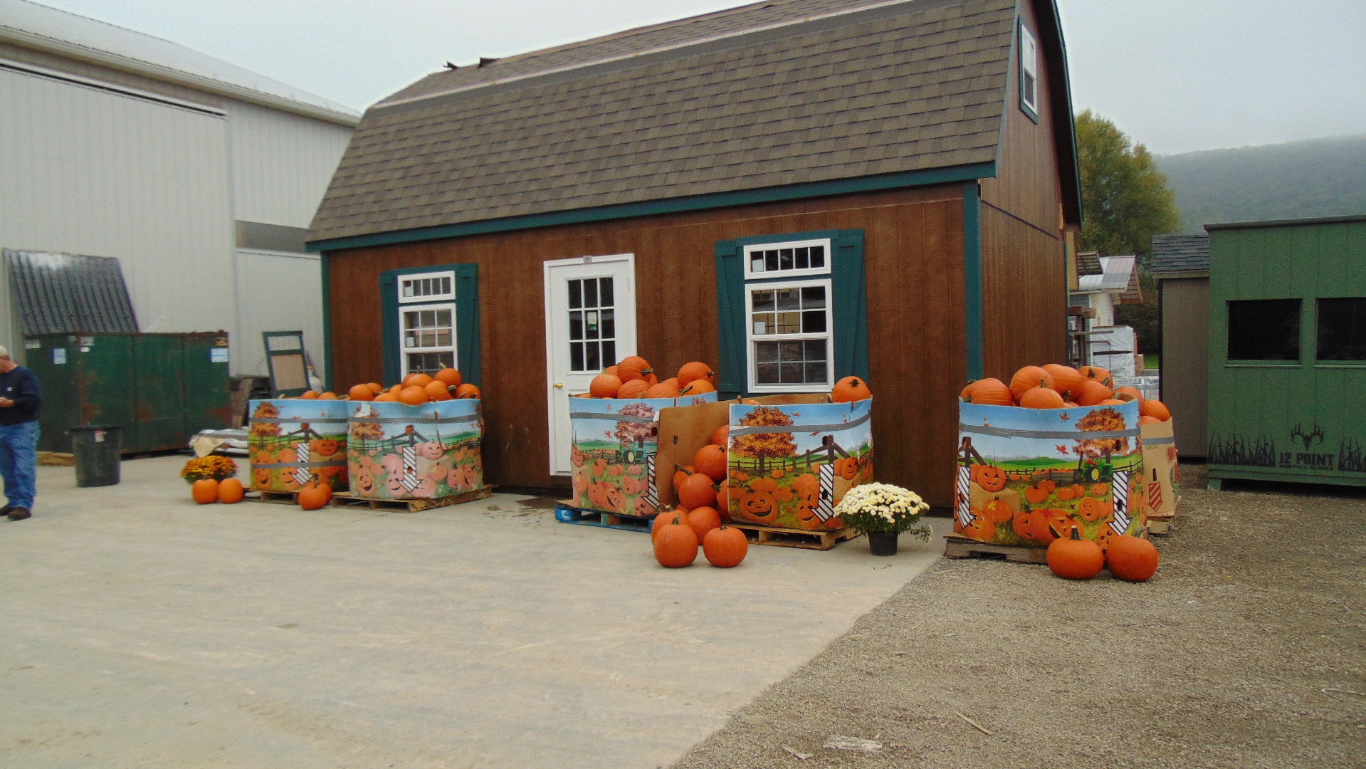 free pumpkins!