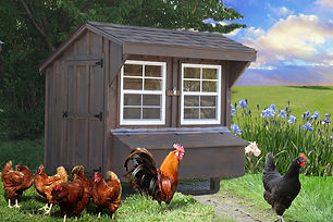 Board & Batten Chicken Coop