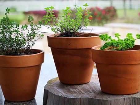 My Love For Gardening