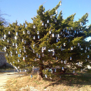 """Fairview's Little """"Beer Tree Home"""" Lives On"""