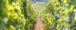 Vignoble Champagne Gallois