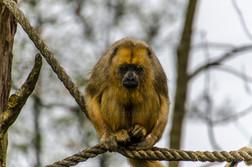 04_Happy_Monkey.jpg