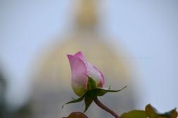 02_Rose_in_Paris.jpg