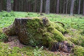 stump-2392575_1920.jpg