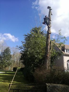 Abattage à côté d'une maison et d'un abri à bois