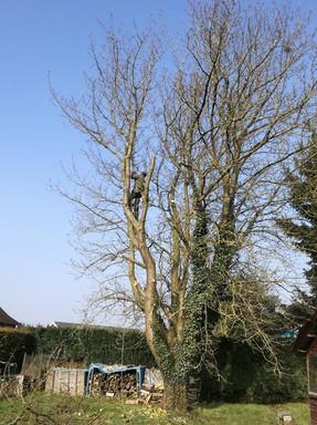 Abattage d'un arbre situé au dessus d'un abri