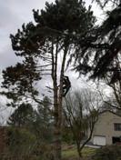 Abattage avec rétention des branches