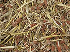 Biomass industry picture