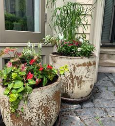 Secret garden potted affair! 🌺