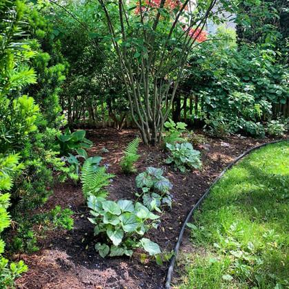 Shade Garden Sanctuary