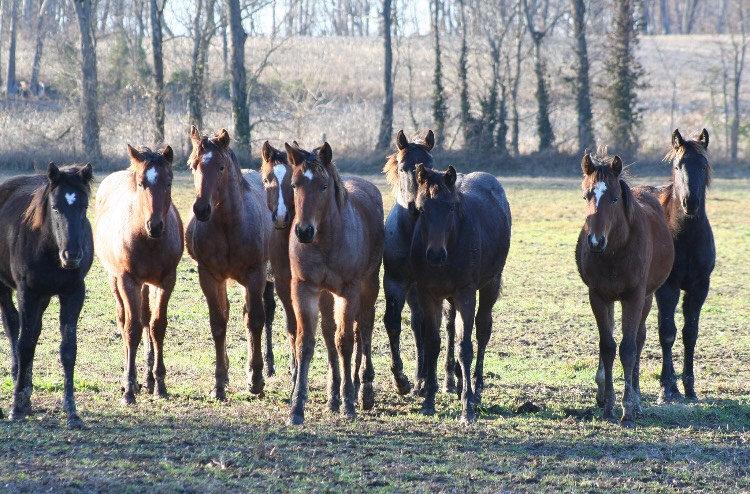 Ali horses 2 .JPG
