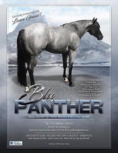 Blu Panther .jpg