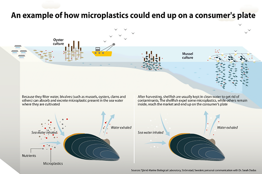 Illustrated exampled of how microplastics could end up on a consumer's plate
