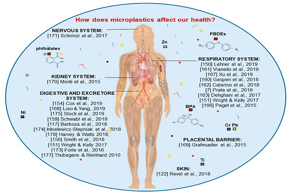 Image of how microplastics affects human health