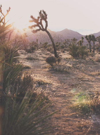 DesertSpringByMAZU__March2020(6069)ANALO