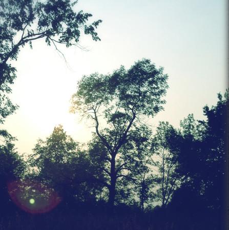 Loud Silence Of Nature-Light (II.) II Zuzana H. Marchandise for DAMAZU Studio
